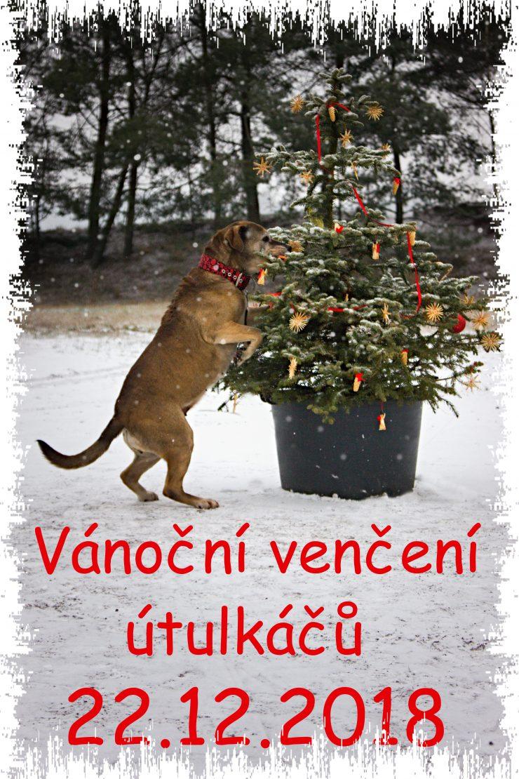 Naši psi a kočky slaví Vánoce už v sobotu 22. prosince. S Vámi. Přijdte je vuzít na procházku, nedělit něco pod stromeček, zahřát se čajem , a možná i  narychlo malý dárek pro dvounožce.